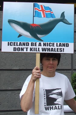 Sam Dawes of Campaign Whale with placard outside the Icelandic Embassy May 2009